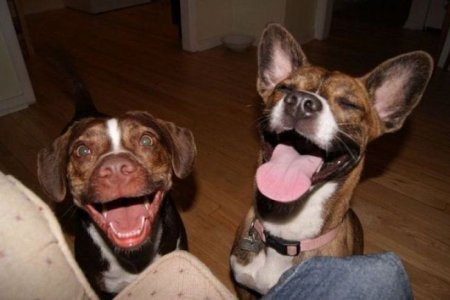 Веселые животные (16-фото)