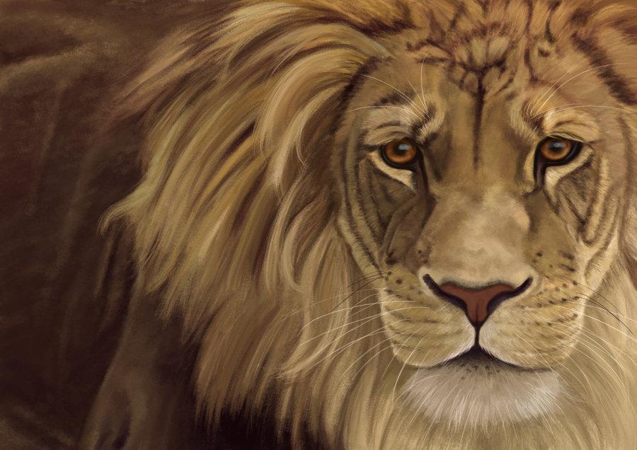 Рисунки животных от Sarah Haras - 34 работы