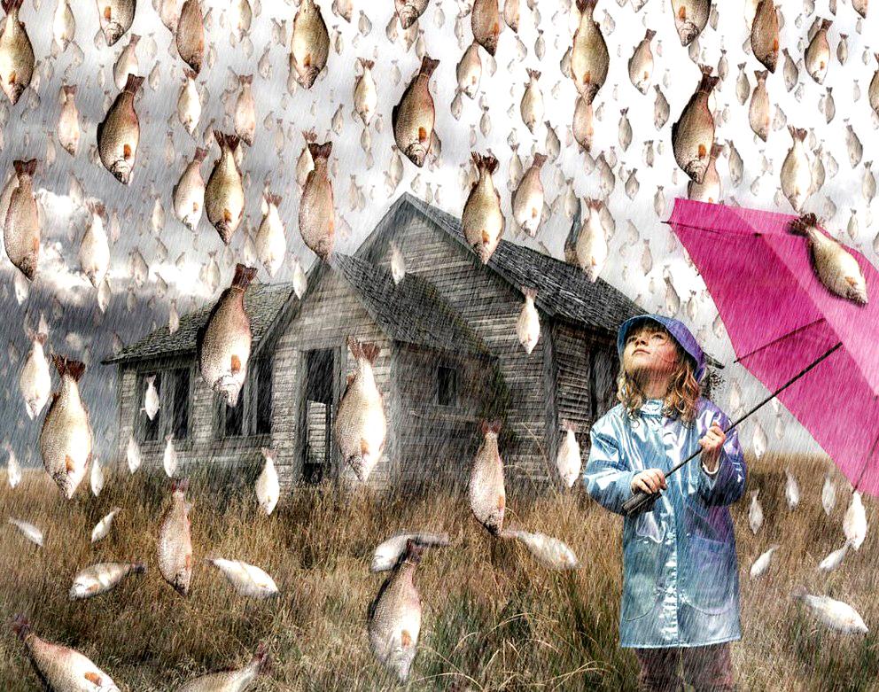 рыбный дождь как это