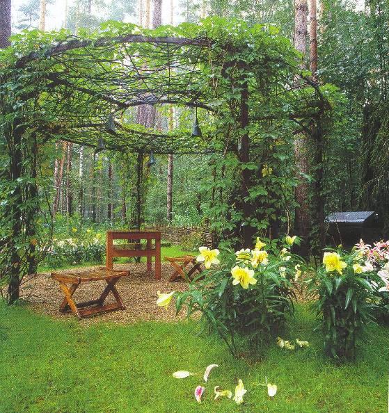 Перголы и арки, как элемент ландшафтного дизайна