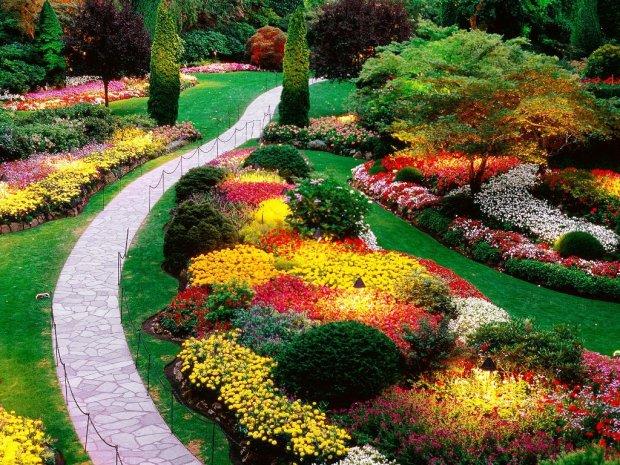 Как выбрать многолетние травы для сада и правильно составить композицию