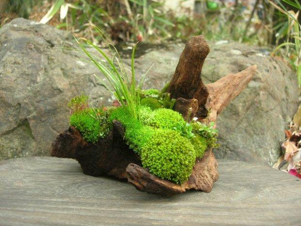 Рутарий в саду - Коряги и пни в саду