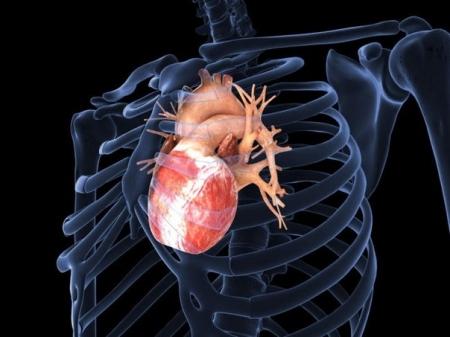 Американцы вырастили живое сердце из перепрограммированных клеток