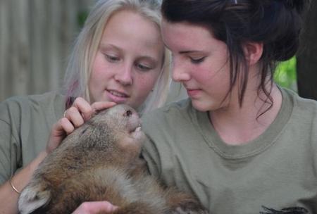 Вомбат - маленький медведь Австралии