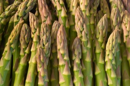 Аспарагус (Спаржа) - Энциклопедия садовых растений
