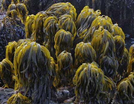 Салат из морских водорослей и лапши Келп - Японская кухня