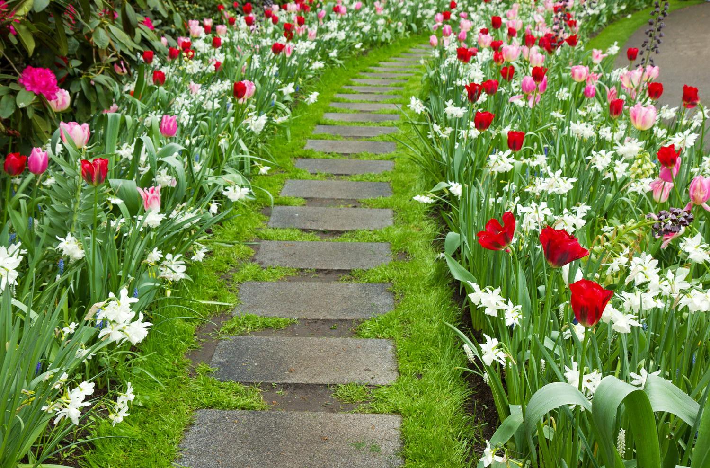 Фото цветы вдоль дорожки