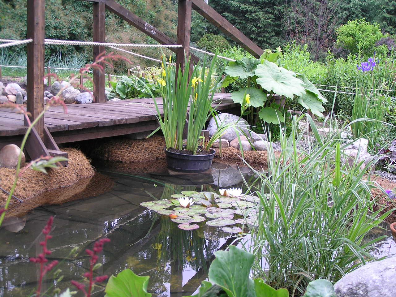 Цветы у водоема фото