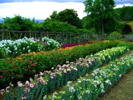 Эустома - Энциклопедия садовых растений