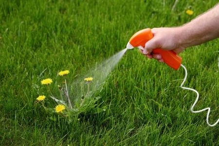 Избавляемся от сорняков и растений с помощью гербицидов