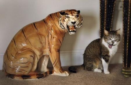 Эти забавные животные - 93 фотографии