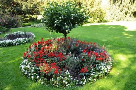 Растения которые можно сажать под деревьями