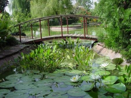 Выбираем растения для пруда-купальни