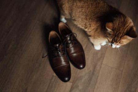 Как выводить кошачью мочу с мебели и обуви? Боремся с запахом